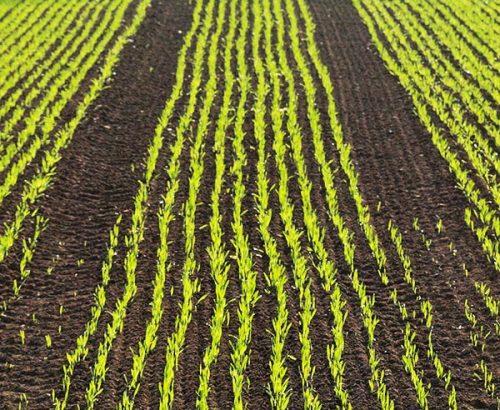 Agrarprodukte